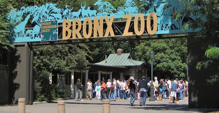 Bronx, NY | http://bit.ly/2ciLHp9